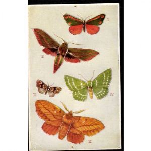 PAPILLONS - Butterflies on the Wing